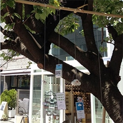 Duncan Shotton's POP-UP A TREE SHOP in Harajuku, Tokyo