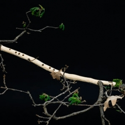 Swedish art student, Anna Kovárová creates Woodwind for her graduate exhiibition, a side-blown flute carved out of a living oak branch, while still attached to the tree.