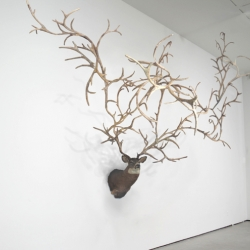 Check out this 300 hundred point buck by Carolyn Salas
