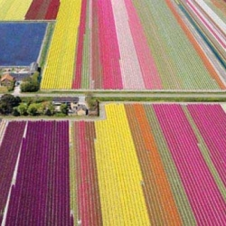 This is an aerial view of the northern Netherlands in the middle of the tulip season. Wow!