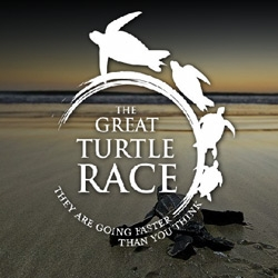 The Great Turtle Race starts in 9 days. Follow 11 gps equiped leatherback turtles as they make their way to the galapagos