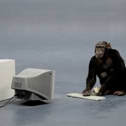 The Lucky Monkey - First monkey on twitter? A real 'monkey' [chimpanzee] generating posts (every 140 typed letters generate a post). If you add him on twitter he's automatically challenged to try to type your name.