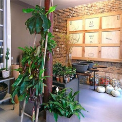 Photos of lovely La Galerie Vegetale in Paris, a rustic homewares/garden shop worth a visit.