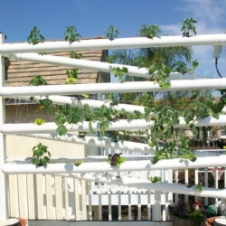 Carlsbad-based Vertical Earth Gardens relies on hydroponics to add green to your space.