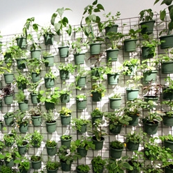 Another vertical garden variation ~ POT WALL! Love this installation at the Valcucine + Surface party ~ also the new sustainable kitchen is gorgeous ~ and the slow food was delicious!!!