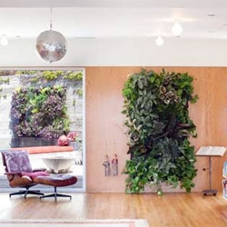 Design*Sponge has a great look into Barbara Bestor's use of Wolly Pockets for many living walls in her house!
