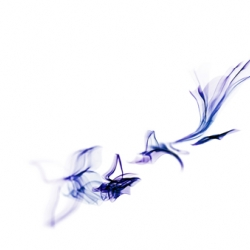 Delicate, fluid, wispy, inky desktop wallpaper: the souls of butterflies.
