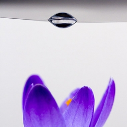 Neat DIY on using a water droplet as a macro lens for your camera phone.
