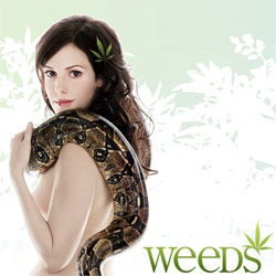 WEEDS ~ is finally back for its third season (you can preview the first episode on sho.com free) ~ and LAist has a great interview with its creator, Jenji Kohan. Also they have a bunch of the gorgeous brilliant intro videos.
