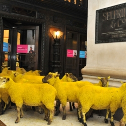 Baaaaaa baaaaa .......Here come the sheep, a clever campaign to promote wool.