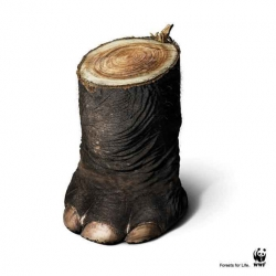 Amazing ads for WWF: Forests for Life by Ogilvy & Mather, Bangkok.
